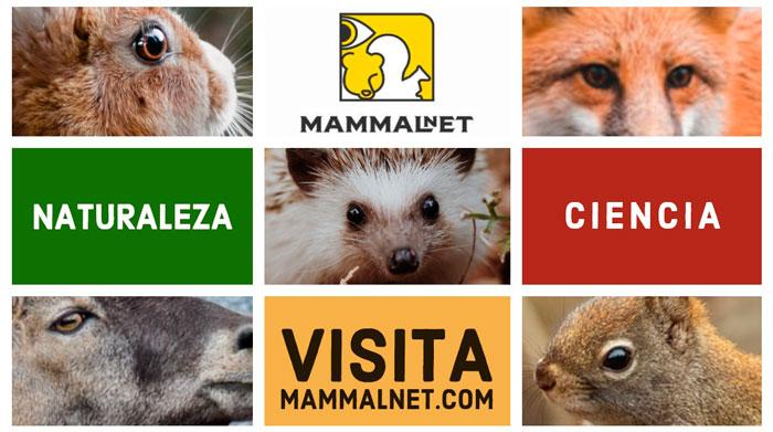 MammalNet