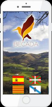 becada-1
