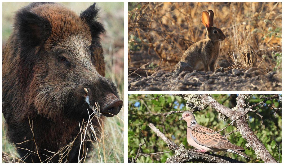 IREC technical meetings wild boar tortola rabbit