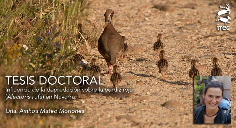 """DEFENSA DE TESIS DOCTORAL: """"Influencia de la depredación sobre la perdiz roja (Alectoris rufa) en Navarra"""""""